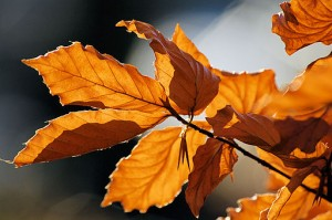 512px-Autumn_leaves_sceenario